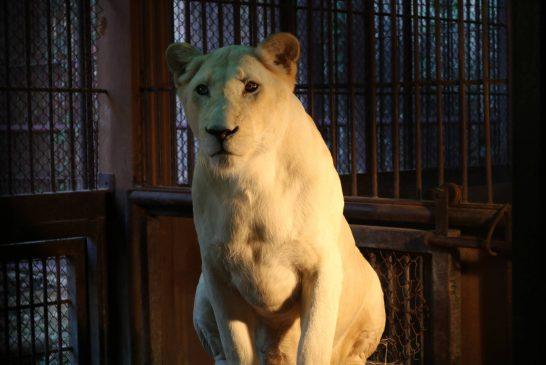 """""""สวนสัตว์ขอนแก่น"""